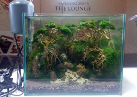Aquascape Live Setup Contest JOFF 2016