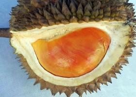 Galeri Pesta Durian 2016