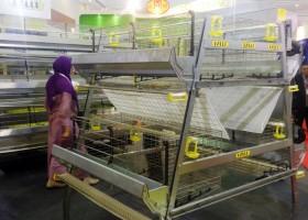 Bebeja Indo Livestock 2016 (2): Rak Kandang Ayam