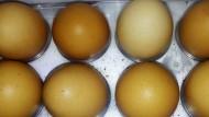 Fakta Kerabang Telur Cokelat Dan Putih