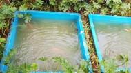 Kolam Ikan Fiber Di Pekarangan