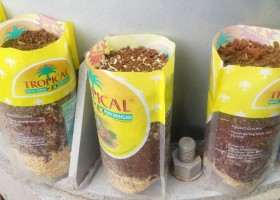 Pot Bungkus Minyak Goreng