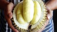 Akurasi 80% Durian Enak