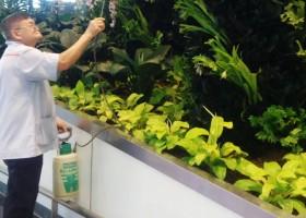 Sehat Ala Lansia Singapura