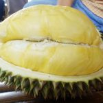 Durian Alfred Russel Wallace