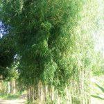 Bambu Menabung Air