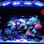 Akuarium Laut: 4 Cara Terbaik