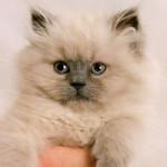 Kucing Super Kecil