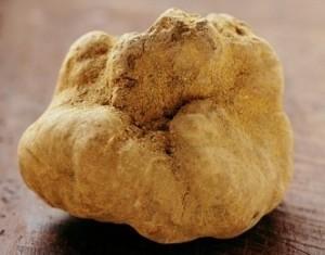 white-truffle