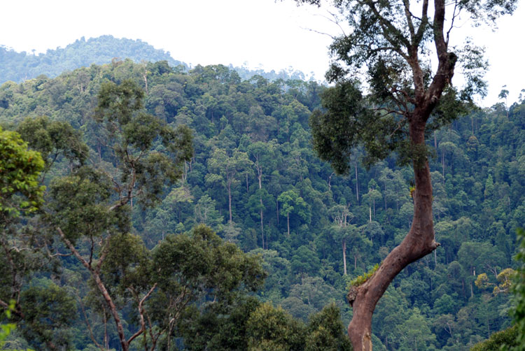 hutan-kalimantan-timur