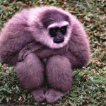 Bintang 5 Daya Ingat Primata