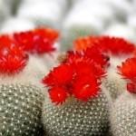 7 Ciri Kaktus Sakit