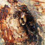 Lebah Trigona Kaya Manfaat