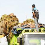 Biogas Sampah Sayuran (1)