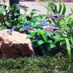 Aquascaping Murah, Hemat, Dan Berkualitas