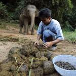 Kopi Kotoran Gajah Dan Blake Dinkin