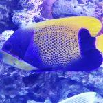 Waspada Beri Pakan Ikan Hias Laut