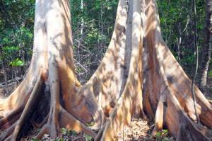 kayu-indonesia