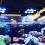 Akuarium Laut: Manajemen Air