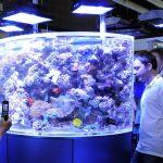 Tips Beli Biota Akuarium Laut