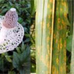 International Symposium on Tropical Fungi 2013 IPB