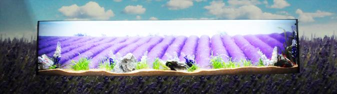 ... dinding aquascaping akuarium dinding itu juga mengambil latar ladang