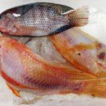 Cara Produksi Tepung Ikan