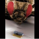 Robot Medis Liliput
