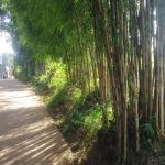 Saatnya Berkebun Bambu