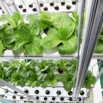 Pertanian Vertikal Di Korea Selatan