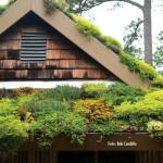 Bertanam Di Atap Rumah