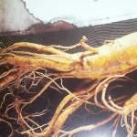 Khasiat Ginseng Merah Korea
