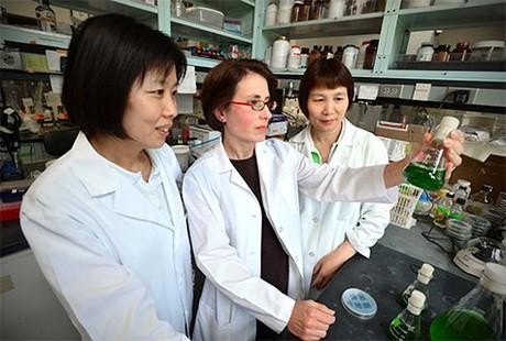 peneliti bakteri