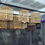 Universitas Burung Berkicau