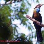 Sumba, Daerah Burung Endemik Kawasan Wallacea