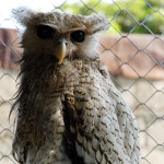 Walet 18: Burung Hantu Silakan Pergi
