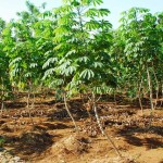 Hitung Kelayakan Usaha Pertanian