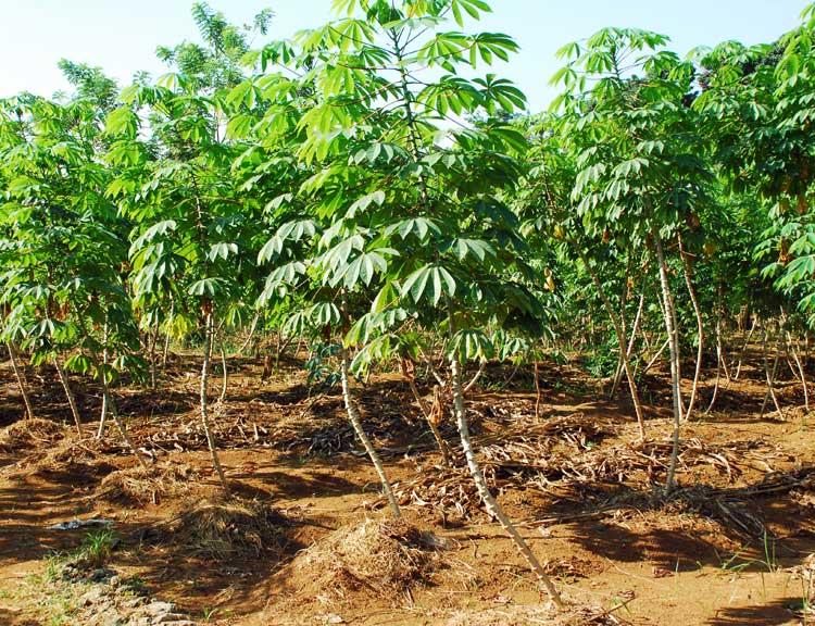 Hitung Kelayakan Usaha Pertanian Bebejacom
