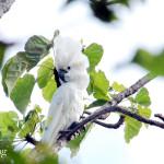 Tujuh Jenis Burung Baru Ada di Indonesia