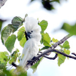 Burung Baru Di Indonesia