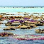 Surga Koral Di Pulau Sambangan