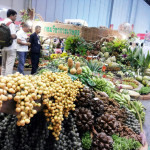Horti Asia Fair 2014 Bangkok, Thailand (2)