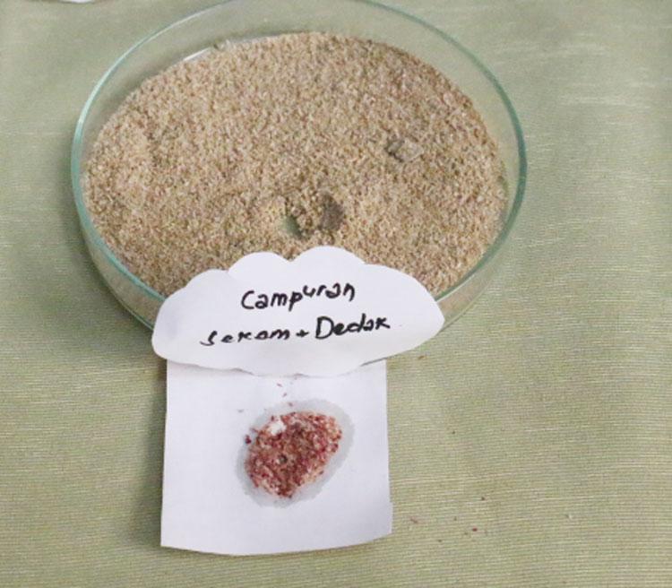 Dedak dioplos sekam ditetesi larutan Florogucinol berwarna merah