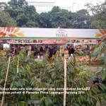 Pameran Flona Lapangan Banteng 2014 (2)
