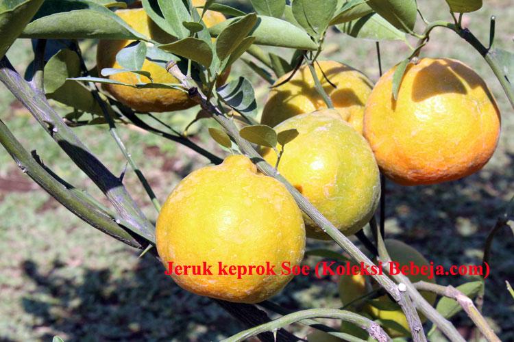 keprok-2