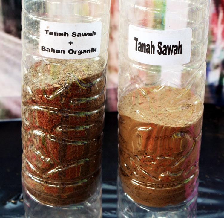 sawah-2