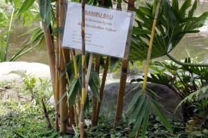 dusun-bambu3