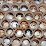 Produksi Kumbang Ulat Jerman
