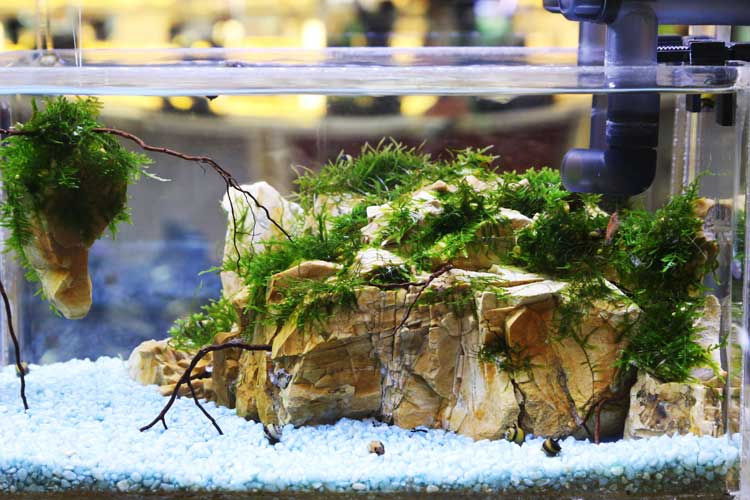 aquascaping1