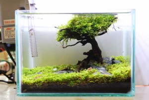 aquascaping3